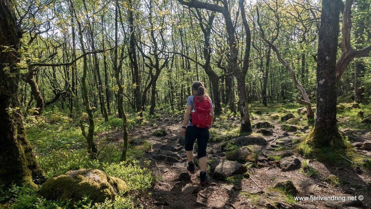 galleri-bjodnalia-snorestad_fottur_fjell-vandringas10