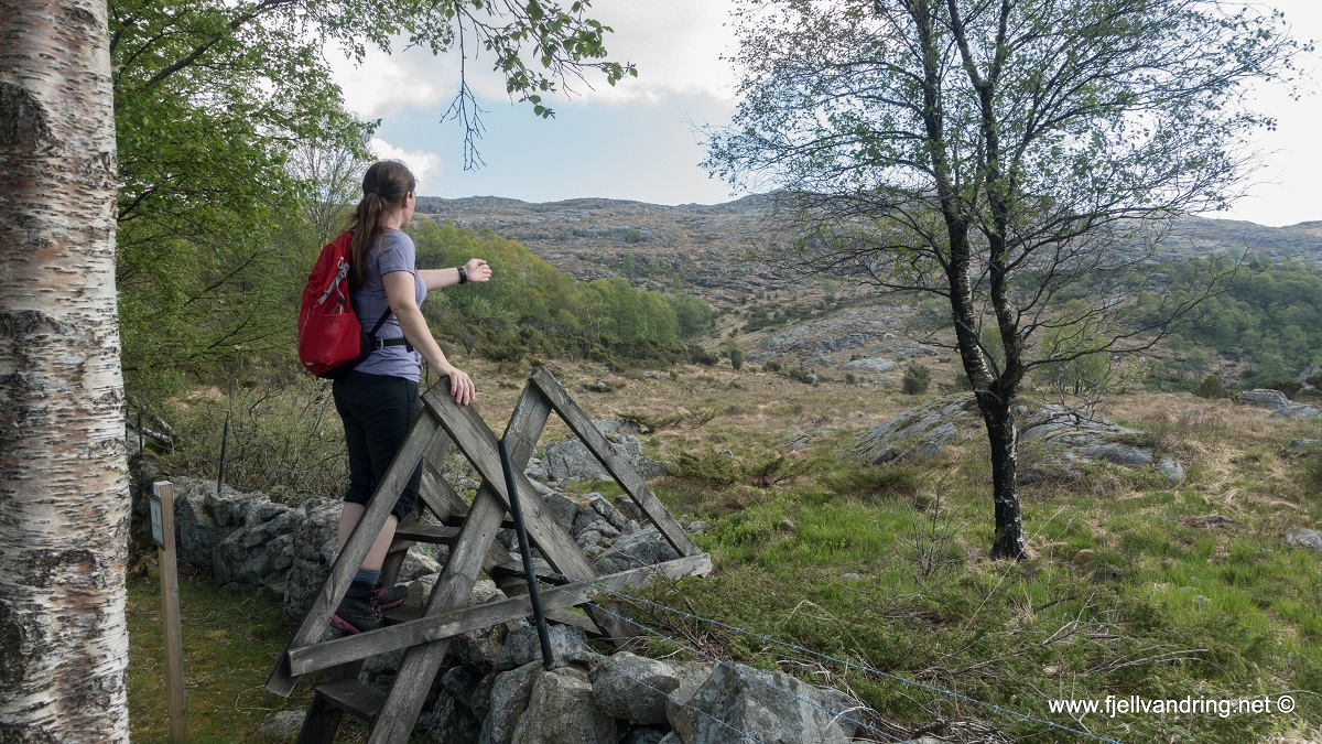 galleri-bjodnalia-snorestad_fottur_fjell-vandringas7