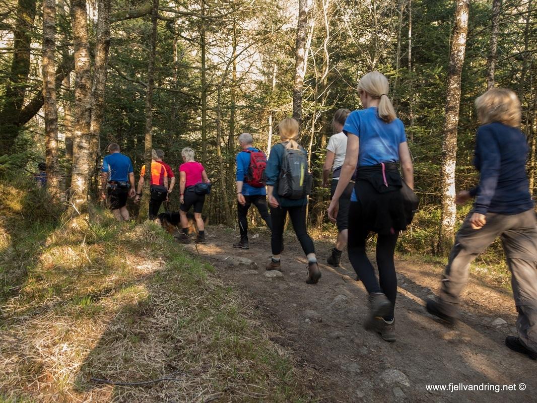 sealandsskogen-bjodnalia_fottur_fjell-vandringas3