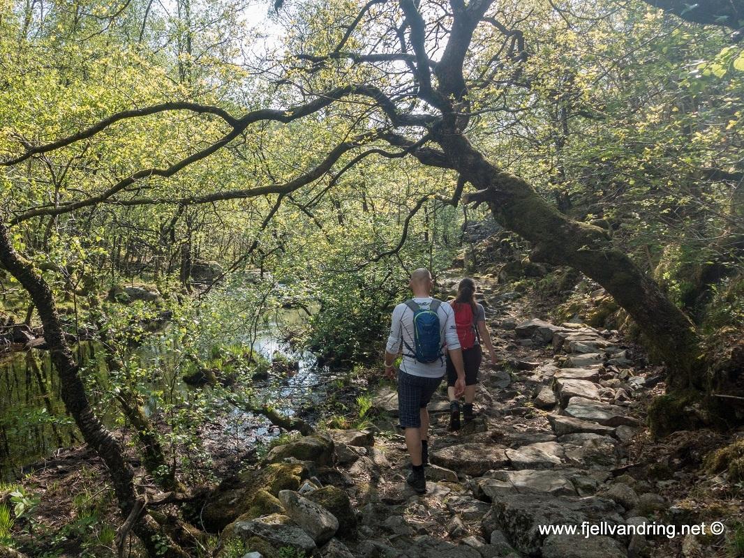 sealandsskogen-bjodnalia_fottur_fjell-vandringas5