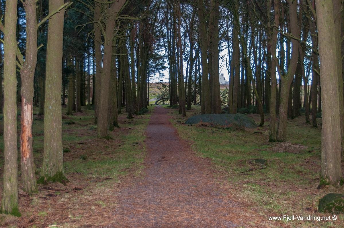 Hanabergsmarka - Et lite skogsholt