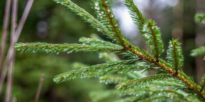 Njåskogen lysløype - En lun skogstur på Bryne