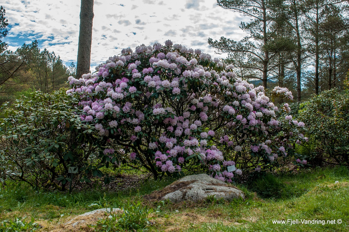 Rogaland Arboret - Rhododendrondalen