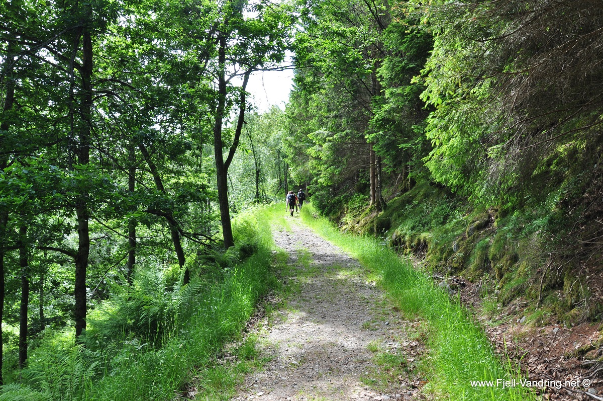 Gullbergknuden - På gruveveien oppover