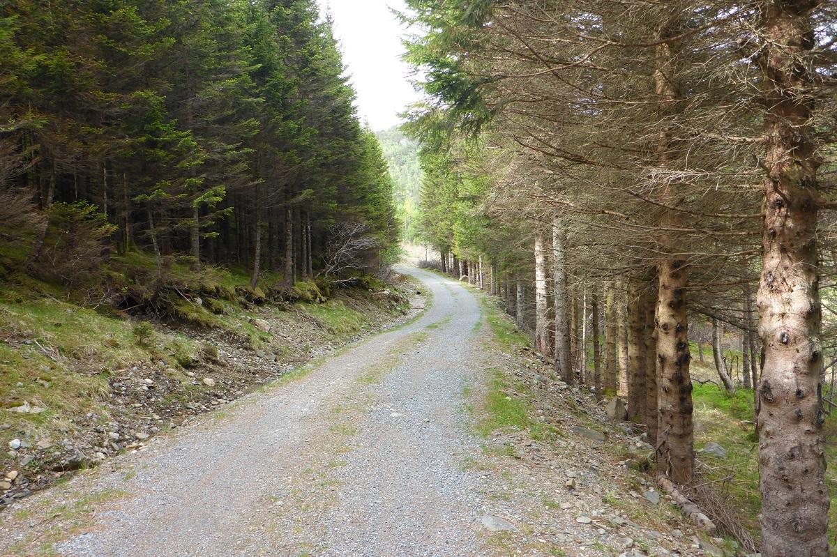 Trodla-Tysdal - Grusvei tilbake til parkeringsplass