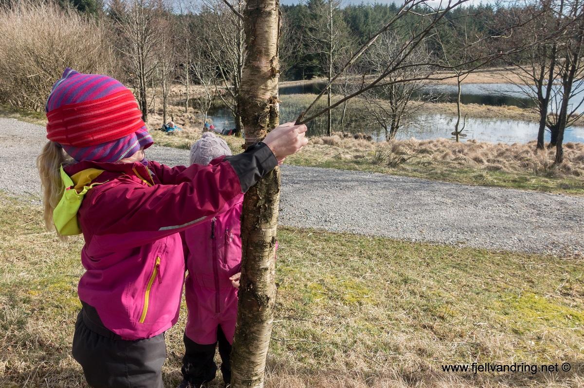 Finn treet - Aktiviteten som utfordrer sansene