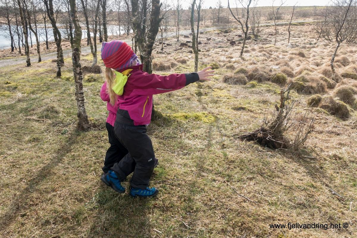 Finn treet - Aktivitetstips