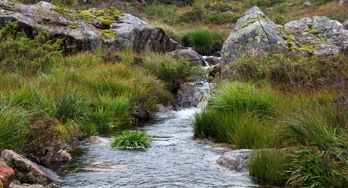 Grønhaug og Solliknuden - Idyllisk terreng
