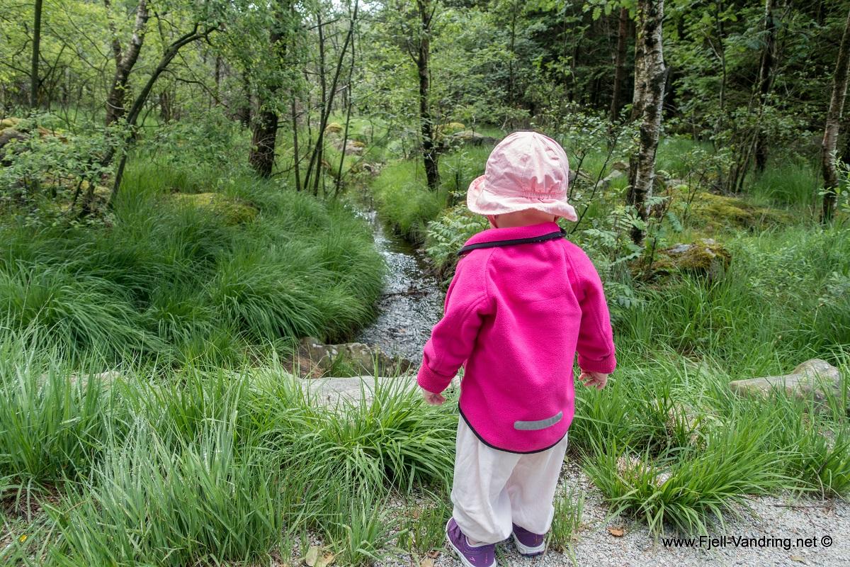 Kubbetjørn - Familietur fra Gramstad