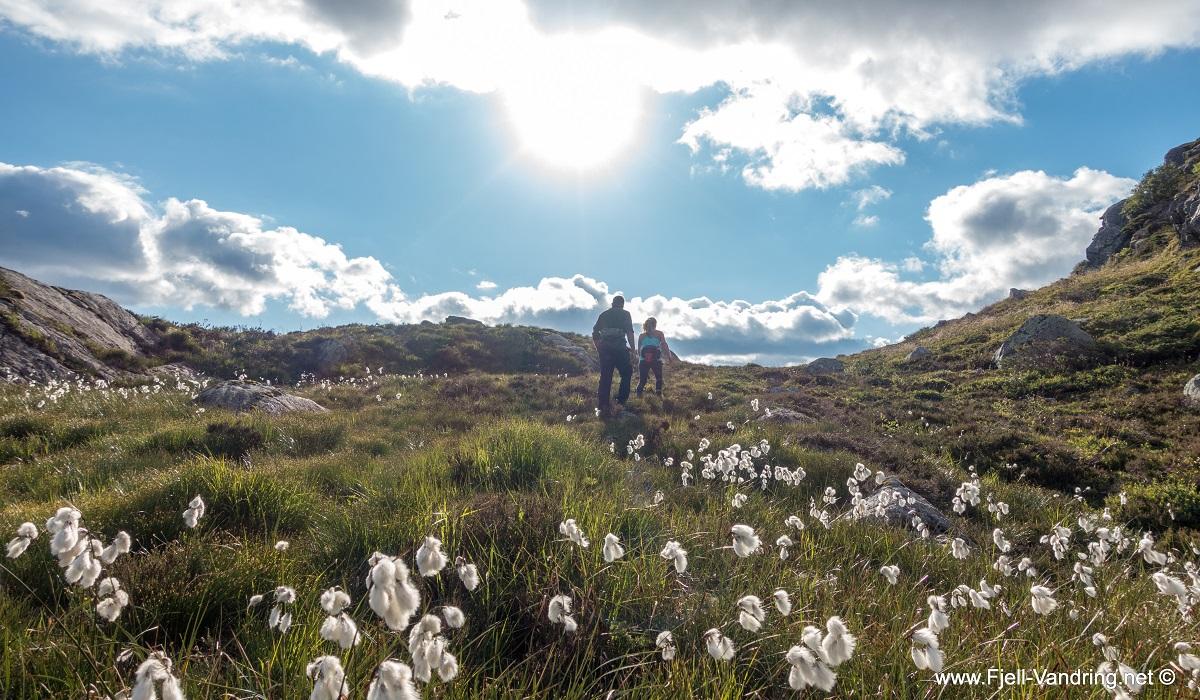 Mjåvassknuten - Idyllisk rundtur fra Ørsdalen