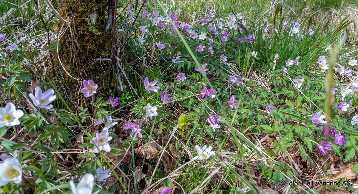Storafjellet - Nydelig fauna