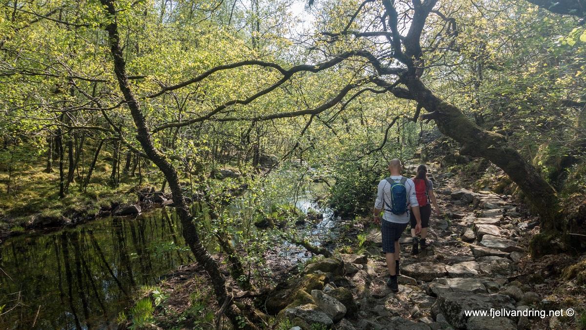 Bjødnalia - Fra Snorestad via Lauvlia og Skogen