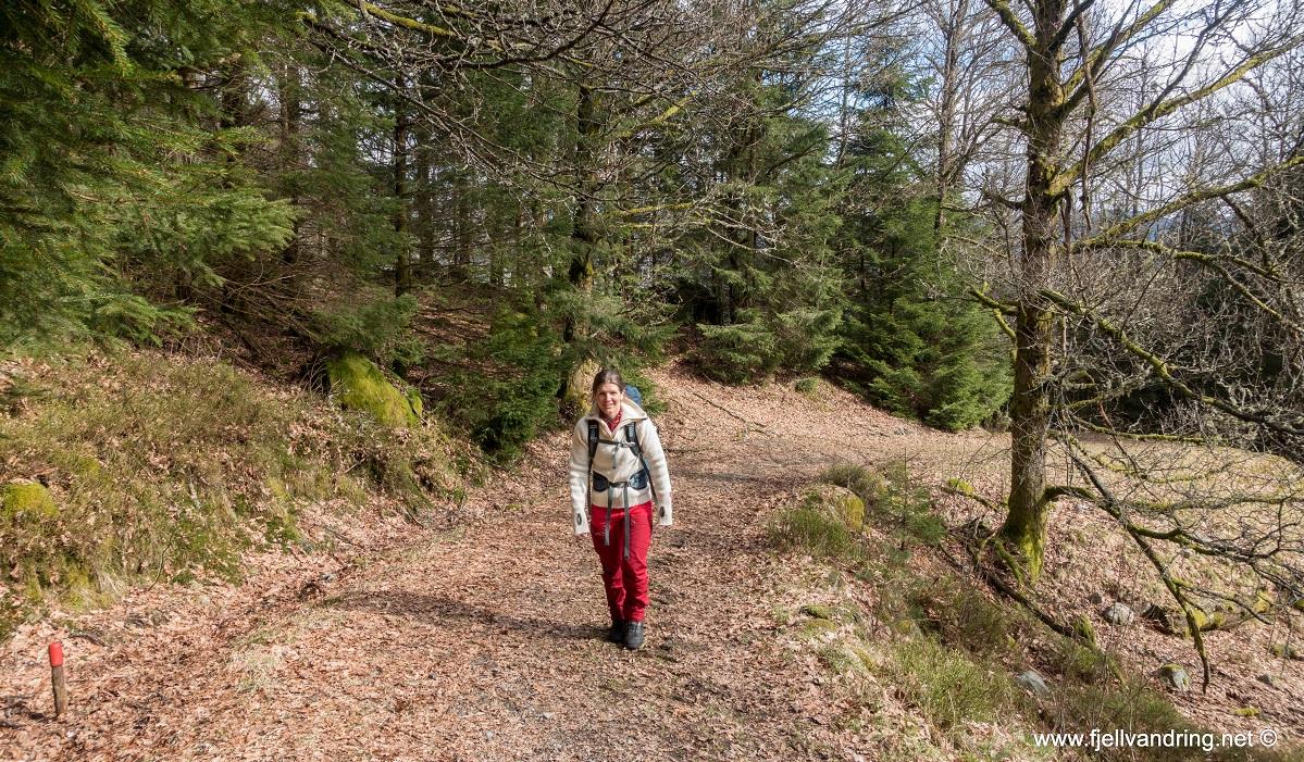Jegningsknuten - Heidi på vei oppover mot Gursli og Gullbergknuden