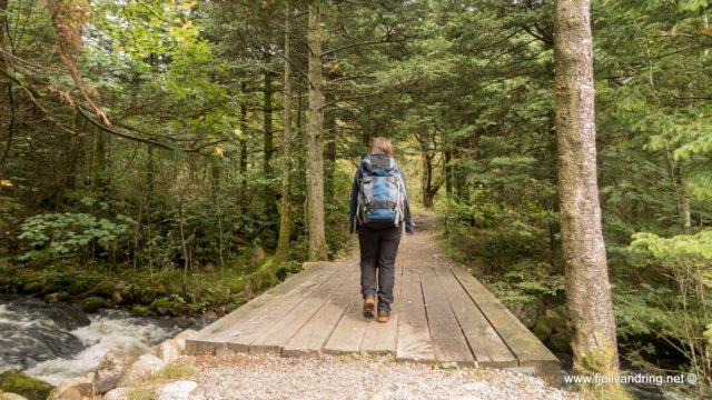 Sælandsskogen - Fotturen starter lettgått på god skogssti