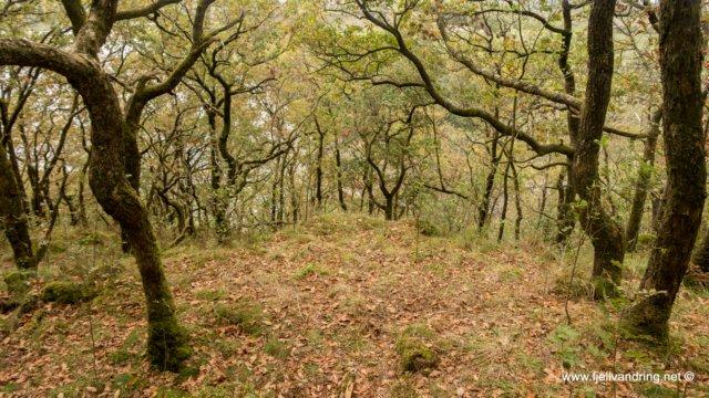 Sælandsskogen - Et godt sted å henge opp hengekøyen