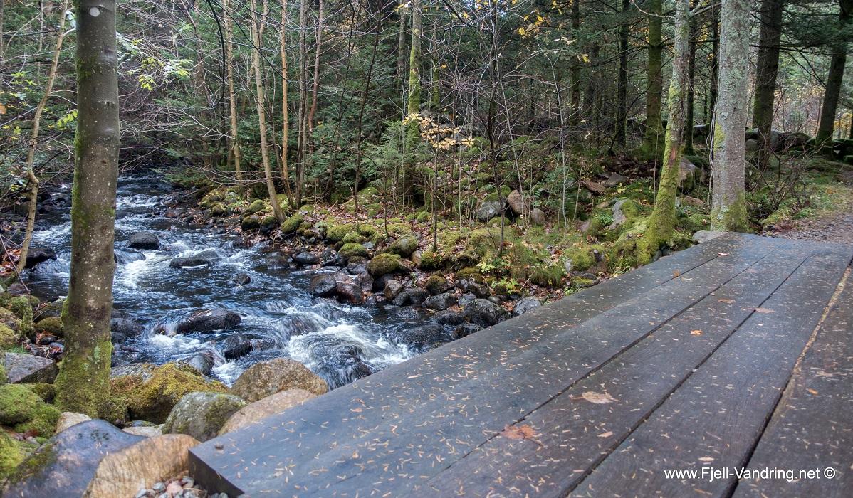 Sælandsskogen og Taksdalsvatnet - Spennende for små og store