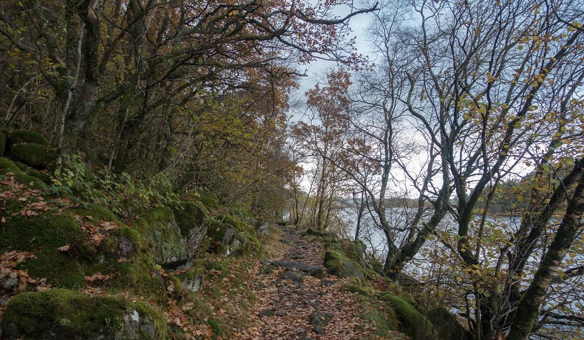 Sælandsskogen og Taksdalsvatnet - Langs vannet