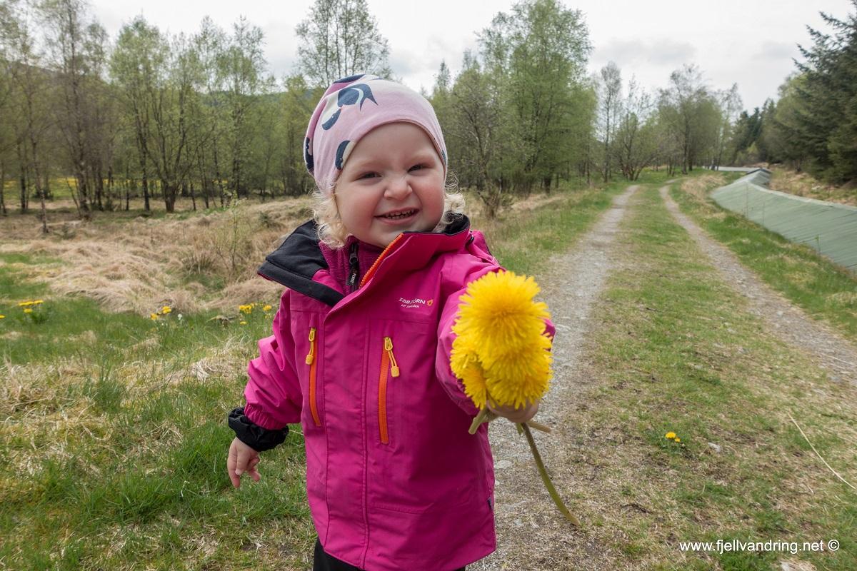 """Sygno - Marikken har plukket """"blomst"""" til pappa"""