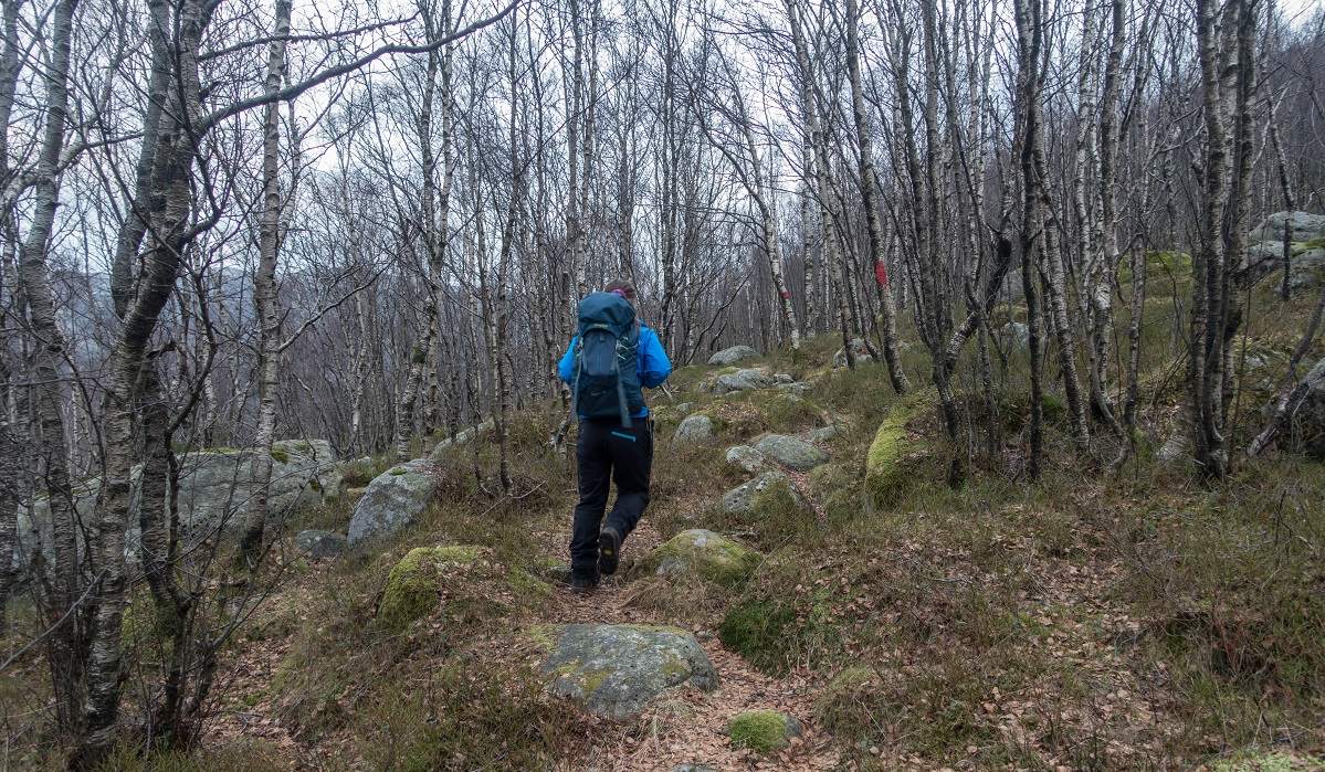 Trollarinda - Fotturen starter igjennom bjørkeskog