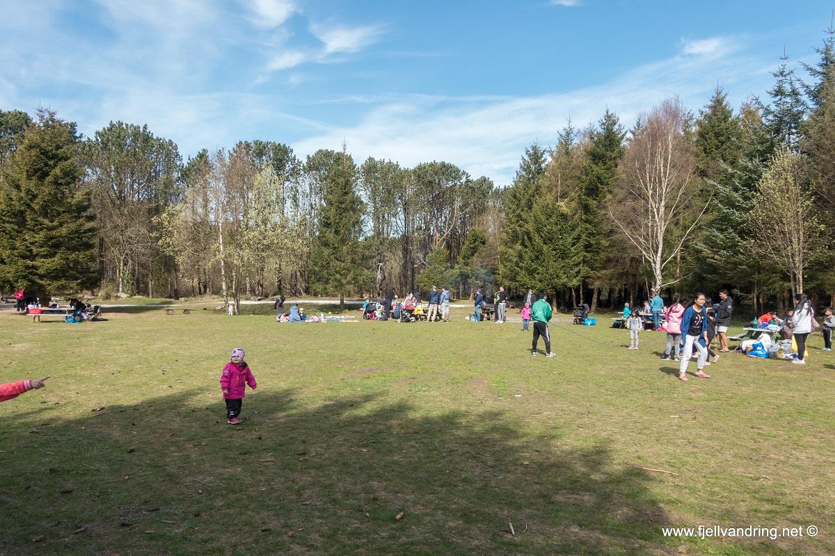 Trollskogen - Gressletta er populær til lek og aktiviteter